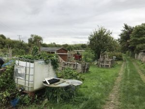 Coton allotments in September 2017.