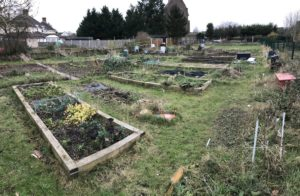 Kendal Way allotments in January 2018.