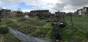 Auckland Road allotments in March 2018.