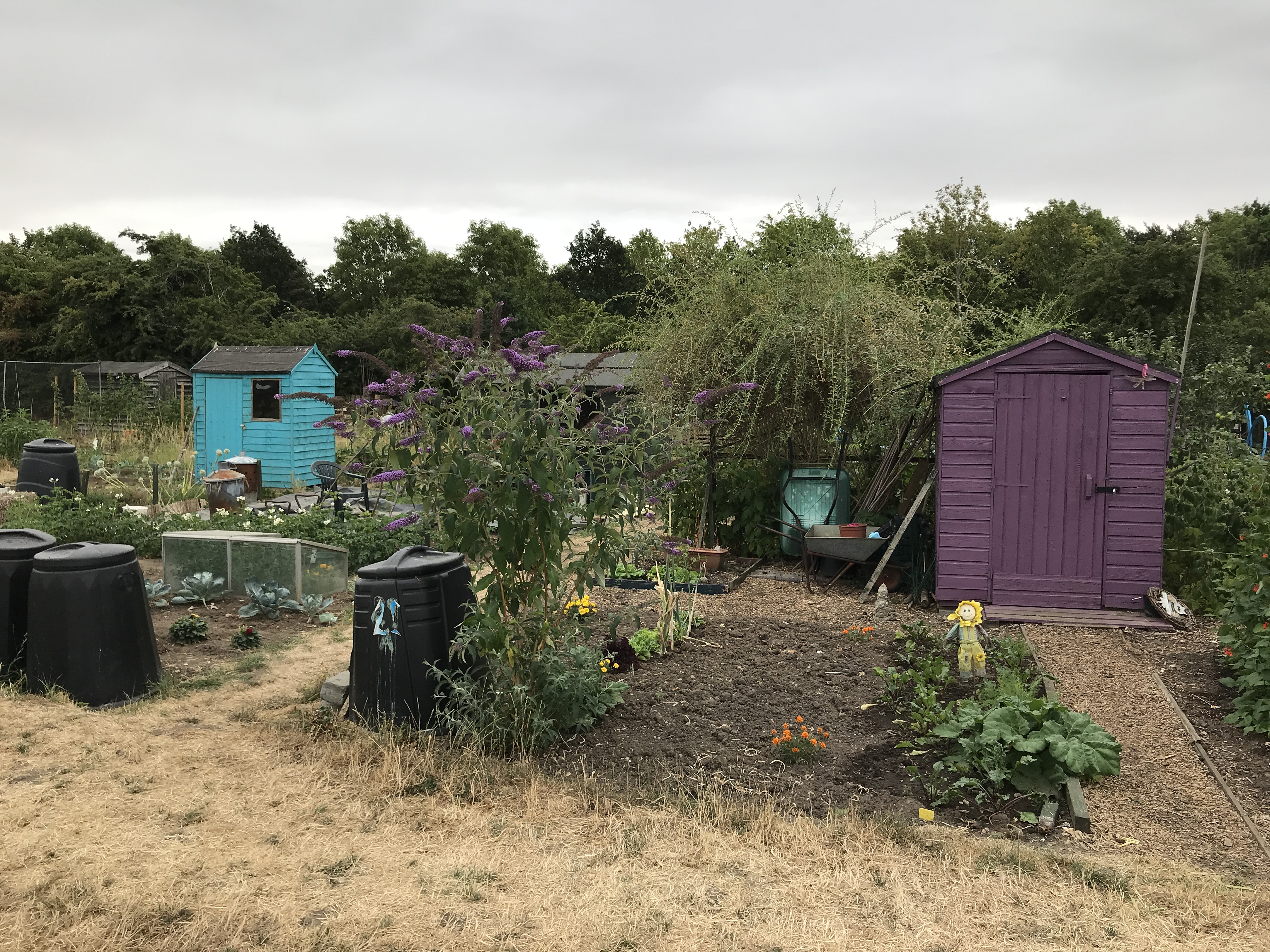 Sheds at the nearby Foster Road allotments.