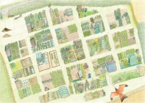Aerial view of Steeple Morden allotments, beautifully illustrated by Becky McMichael