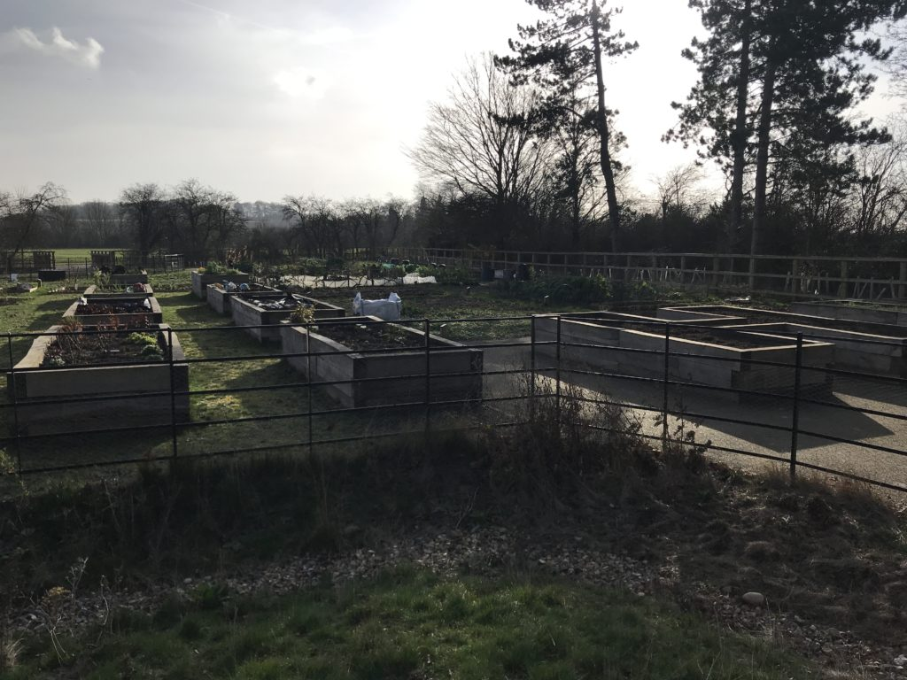 Raised beds in the foreground and conventional allotment plots behind.