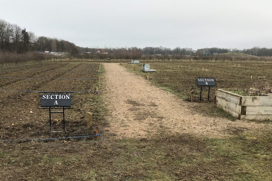 Photo taken February 2021 showing plots marked out in sections labelled A B & C on recently rotovated land at the new Clay Farm allotment site.